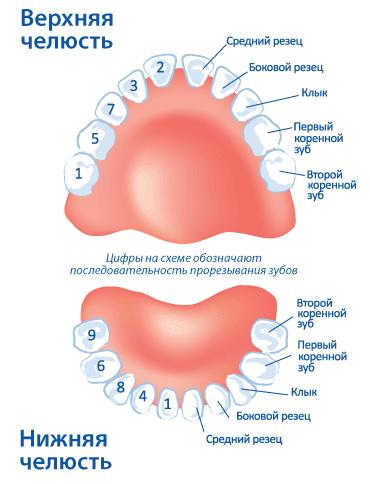 prorezyvanie-zubov11